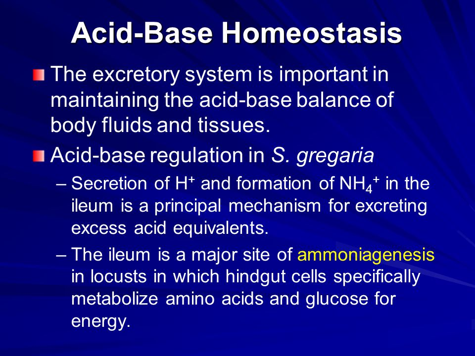 Acid-Base Homeostasis The excretory system is important in maintaining the acid-base balance of body fluids and tissues. Acid-base regulation in S. gr