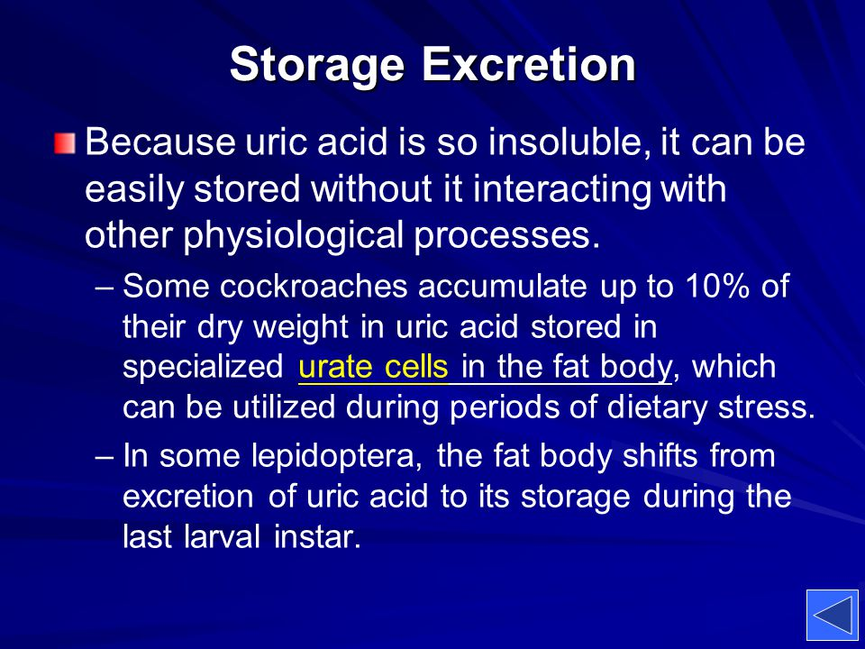 Storage Excretion Because uric acid is so insoluble, it can be easily stored without it interacting with other physiological processes. – –Some cockro