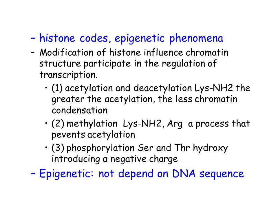 –histone codes, epigenetic phenomena –Modification of histone influence chromatin structure participate in the regulation of transcription.