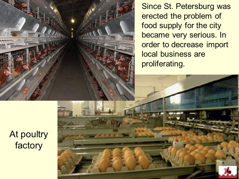 At poultry factory Since St. Petersburg was erected the problem of food supply for the city became very serious. In order to decrease import local bus