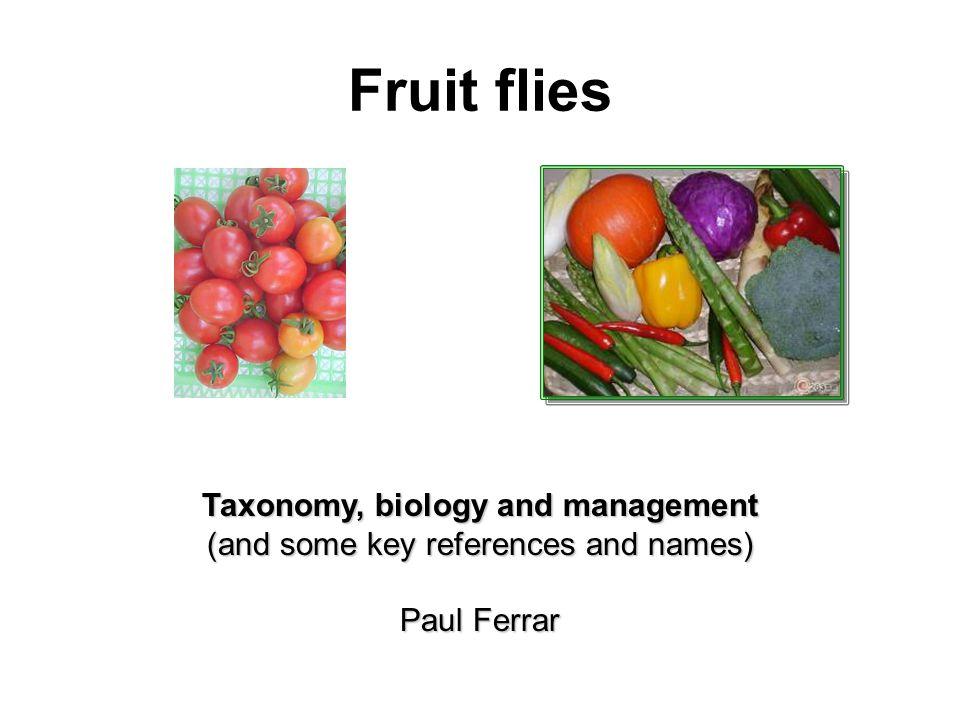 Fruit flies Taxonomy, biology and management (and some key references and names) Paul Ferrar
