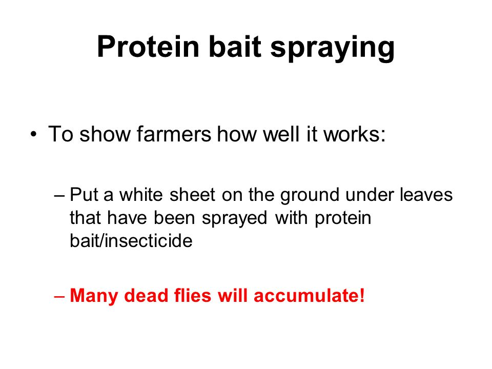 Protein bait spraying To show farmers how well it works: –Put a white sheet on the ground under leaves that have been sprayed with protein bait/insect