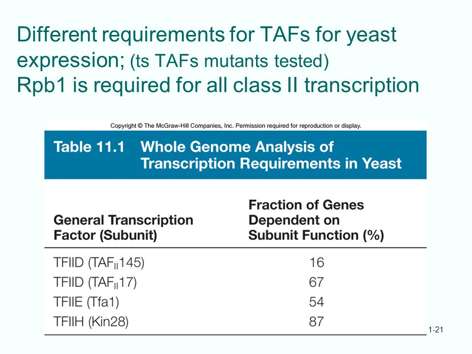 Different requirements for TAFs for yeast expression; (ts TAFs mutants tested) Rpb1 is required for all class II transcription 11-21