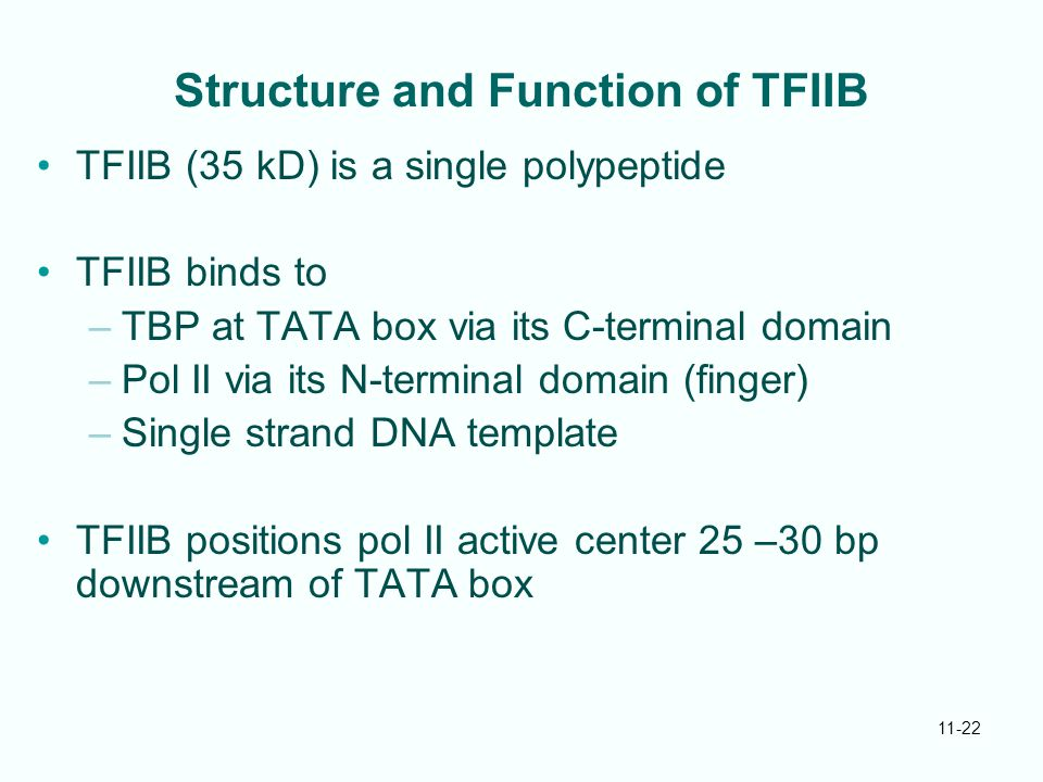 11-22 Structure and Function of TFIIB TFIIB (35 kD) is a single polypeptide TFIIB binds to –TBP at TATA box via its C-terminal domain –Pol II via its