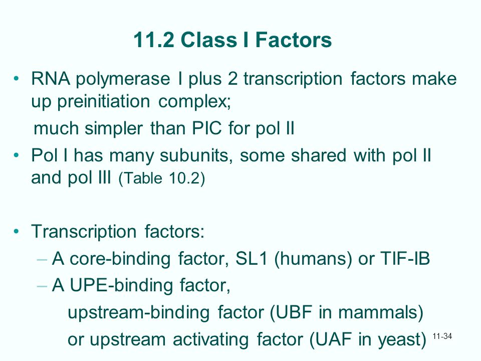 11-34 11.2 Class I Factors RNA polymerase I plus 2 transcription factors make up preinitiation complex; much simpler than PIC for pol II Pol I has many subunits, some shared with pol II and pol III (Table 10.2) Transcription factors: –A core-binding factor, SL1 (humans) or TIF-IB –A UPE-binding factor, upstream-binding factor (UBF in mammals) or upstream activating factor (UAF in yeast)