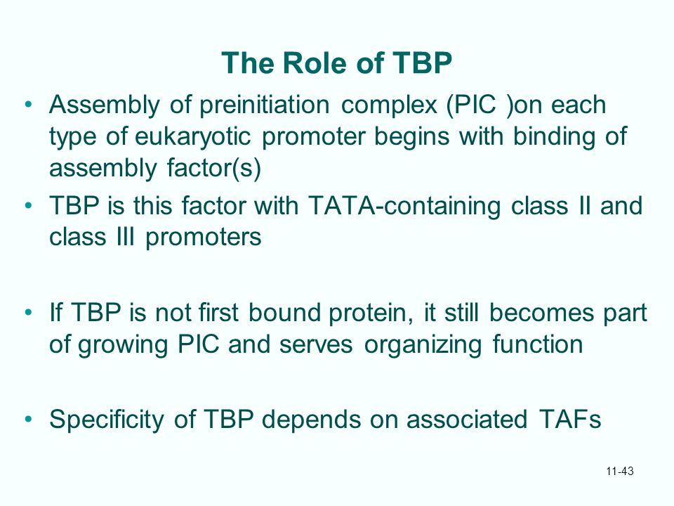 11-43 The Role of TBP Assembly of preinitiation complex (PIC )on each type of eukaryotic promoter begins with binding of assembly factor(s) TBP is this factor with TATA-containing class II and class III promoters If TBP is not first bound protein, it still becomes part of growing PIC and serves organizing function Specificity of TBP depends on associated TAFs