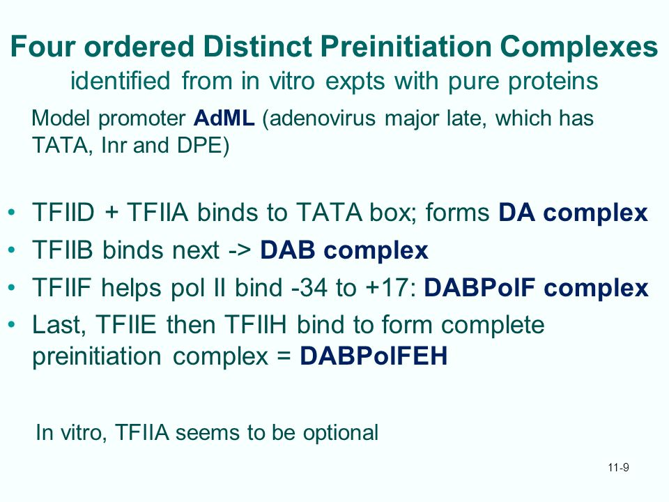 11-9 Four ordered Distinct Preinitiation Complexes identified from in vitro expts with pure proteins Model promoter AdML (adenovirus major late, which has TATA, Inr and DPE) TFIID + TFIIA binds to TATA box; forms DA complex TFIIB binds next -> DAB complex TFIIF helps pol II bind -34 to +17: DABPolF complex Last, TFIIE then TFIIH bind to form complete preinitiation complex = DABPolFEH In vitro, TFIIA seems to be optional