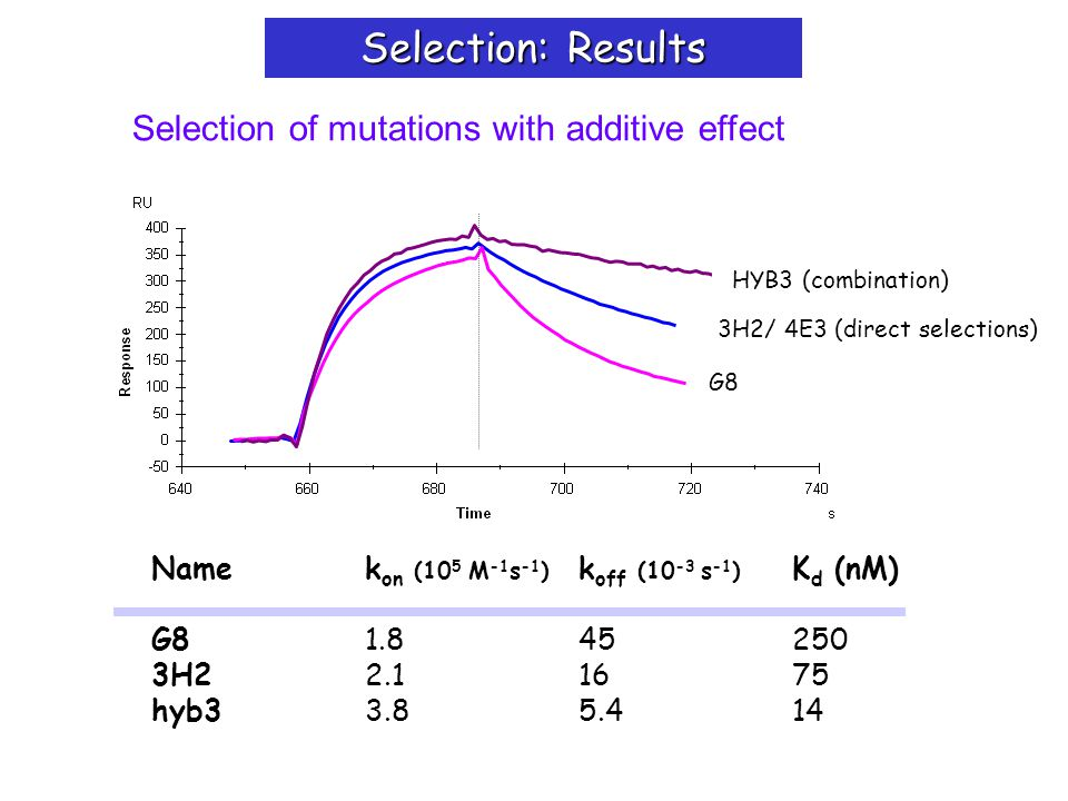 Selection of mutations with additive effect Selection: Results Namek on (10 5 M -1 s -1 ) k off (10 -3 s -1 ) K d (nM) G81.845250 3H22.11675 hyb33.85.414 G8 3H2/ 4E3 (direct selections) HYB3 (combination)