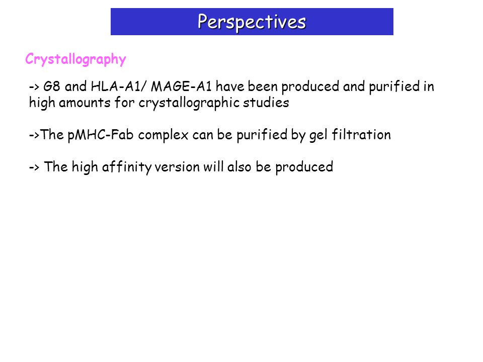 Perspectives Crystallography -> G8 and HLA-A1/ MAGE-A1 have been produced and purified in high amounts for crystallographic studies ->The pMHC-Fab complex can be purified by gel filtration -> The high affinity version will also be produced