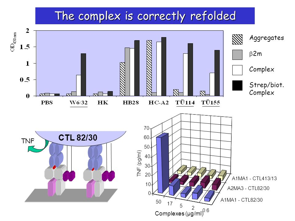 50 17 5 2 0.6 0 10 20 30 40 50 60 70 Complexes (µg/ml) A1MA1 - CTL82/30 A2MA3 - CTL82/30 A1MA1 - CTL413/13 TNF (pg/ml) TNF CTL 82/30 Aggregates 2m Complex Strep/biot.