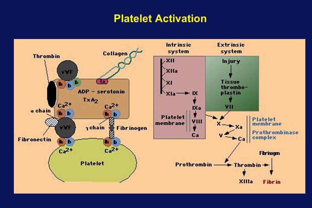 Molecular Weight: 491.40 116.07