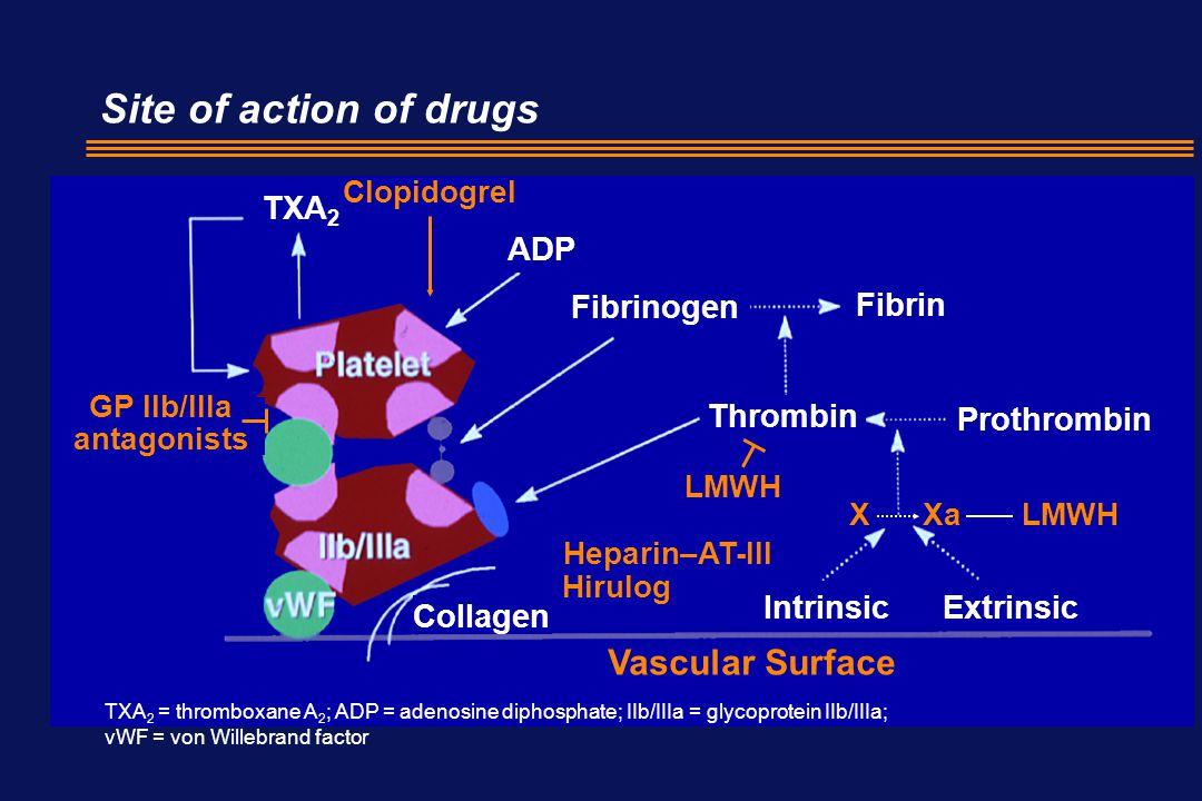 Site of action of drugs TXA 2 ADP Fibrinogen Fibrin Thrombin Prothrombin IntrinsicExtrinsic Collagen Clopidogrel GP IIb/IIIa antagonists LMWH Heparin–