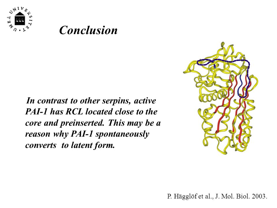 Conclusions PAI-2 is a unique serpin with two mobile loops: the RCL and the CD-loop The CD-loop of PAI-2 is a redox-sensitive molecular switch that regulates conversion between the polymerogenic and the stable monomeric forms of PAI-2.
