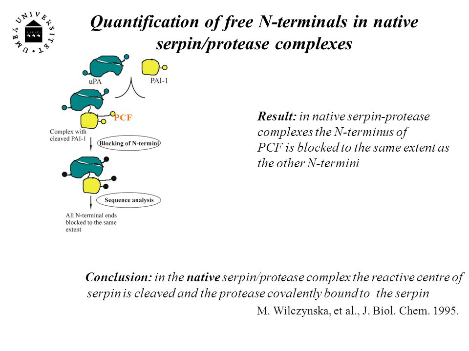 What is the conformation of serpin/protease complex?