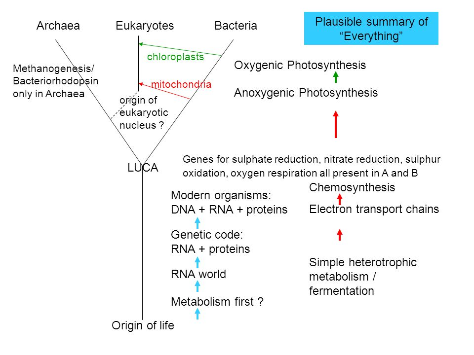 Origin of life Simple heterotrophic metabolism / fermentation Chemosynthesis Electron transport chains LUCA Genes for sulphate reduction, nitrate reduction, sulphur oxidation, oxygen respiration all present in A and B BacteriaArchaeaEukaryotes Modern organisms: DNA + RNA + proteins RNA world Metabolism first .