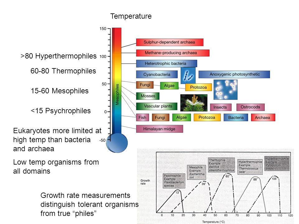Temperature >80 Hyperthermophiles Thermophiles Mesophiles <15 Psychrophiles Eukaryotes more limited at high temp than bacteria and archaea Low temp organisms from all domains Growth rate measurements distinguish tolerant organisms from true philes