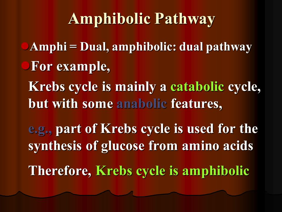 Amphibolic Pathway Amphi = Dual, amphibolic: dual pathway Amphi = Dual, amphibolic: dual pathway For example, For example, Krebs cycle is mainly a cat