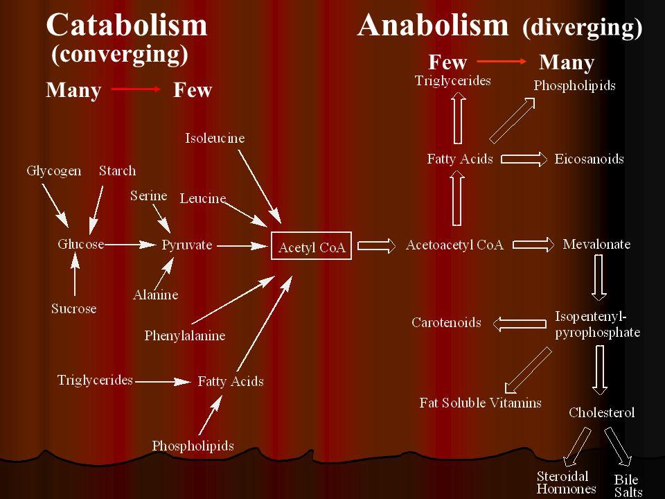 Catabolism Many Few Anabolism Few Many (converging) (diverging)