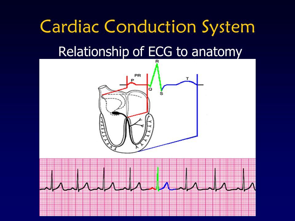 Identify infarct location using a systematic approach Rhythm ST Depression ST Elevation R Wave Progression Q Waves