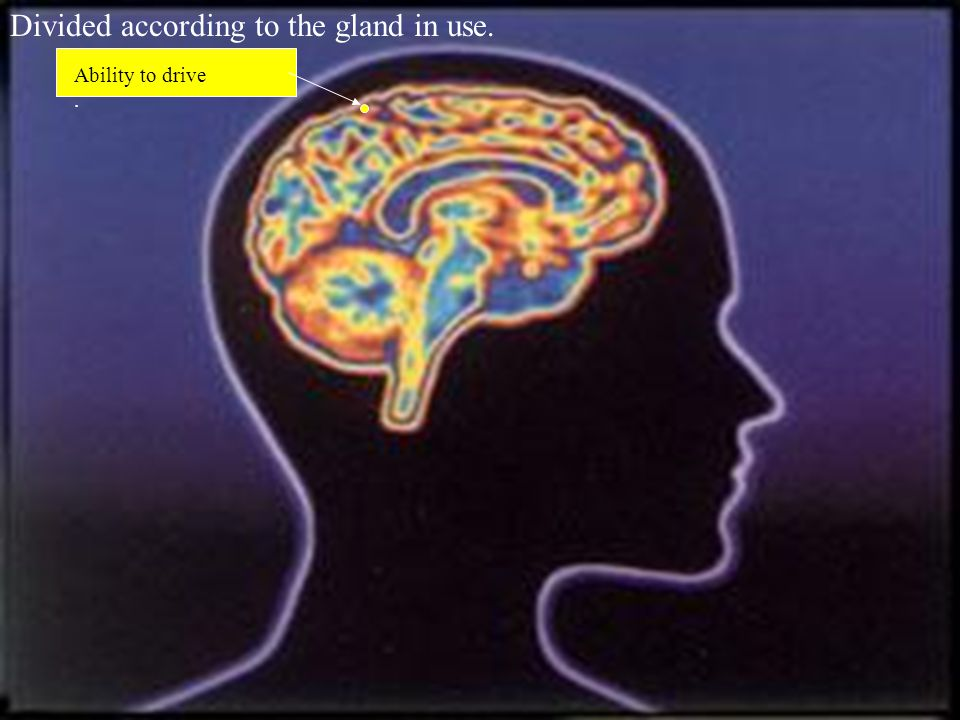 Gland that triggers shoe purchases Gland that generates compulsive shopping Ability to driveAbility to remember birthdays & anniversaries.