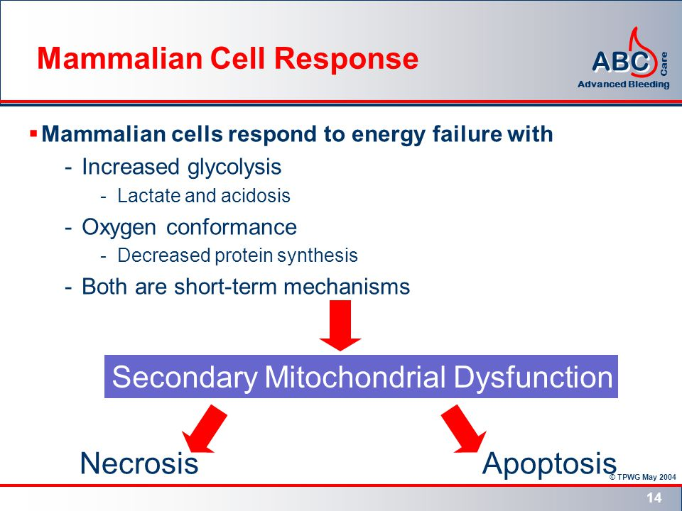 © TPWG May 2004 ABC Advanced Bleeding Care 14 Mammalian cells respond to energy failure with -Increased glycolysis -Lactate and acidosis -Oxygen conformance -Decreased protein synthesis -Both are short-term mechanisms Secondary Mitochondrial Dysfunction ApoptosisNecrosis Mammalian Cell Response