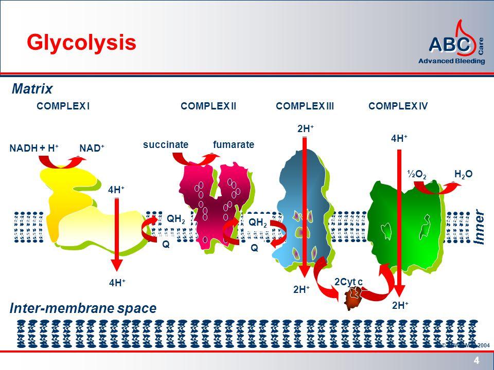 © TPWG May 2004 ABC Advanced Bleeding Care 5 Matrix 3H + ADP + Pi ATP Inter-membrane space Inner membrane H+H+ H+H+ H+H+ H+H+ H+H+ ATP SYNTHASE ATP Synthesis