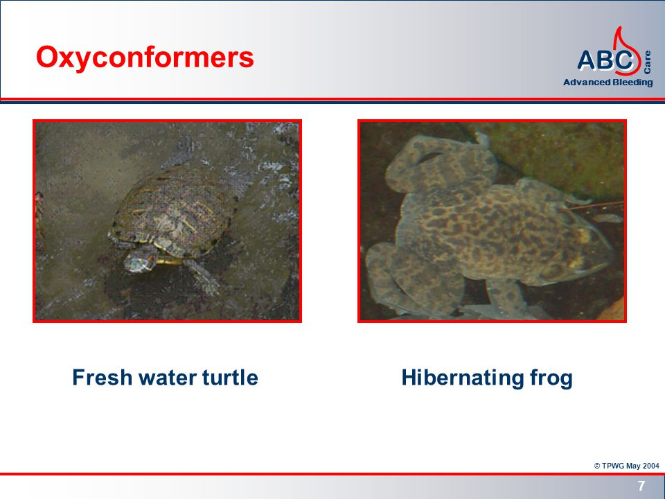 © TPWG May 2004 ABC Advanced Bleeding Care 7 Fresh water turtleHibernating frog Oxyconformers