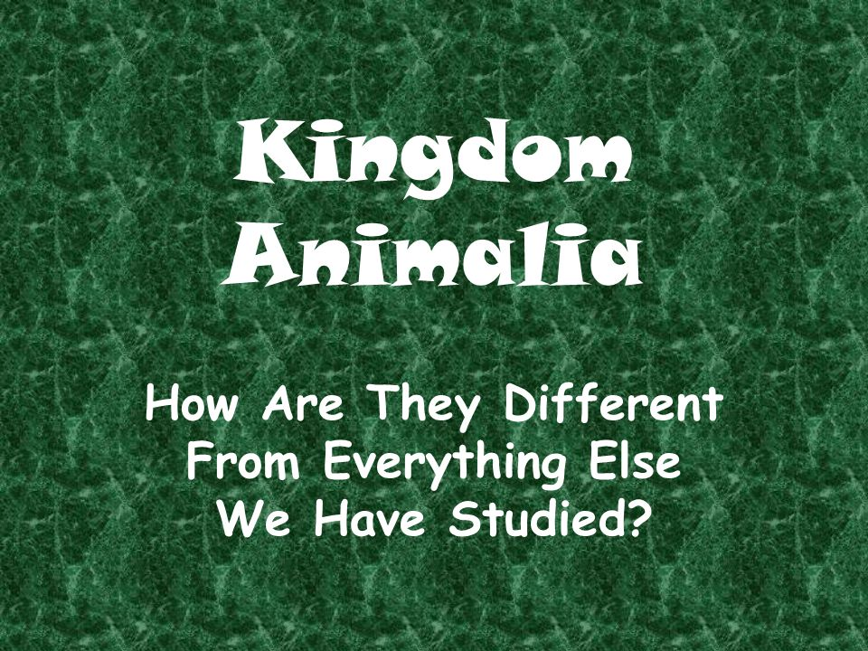 Kingdom Animalia How Are They Different From Everything Else We Have Studied