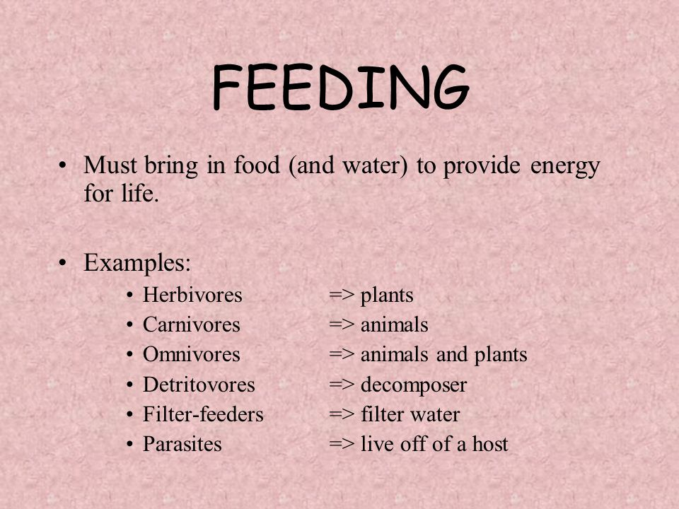 FEEDING Must bring in food (and water) to provide energy for life. Examples: Herbivores=> plants Carnivores=> animals Omnivores=> animals and plants D