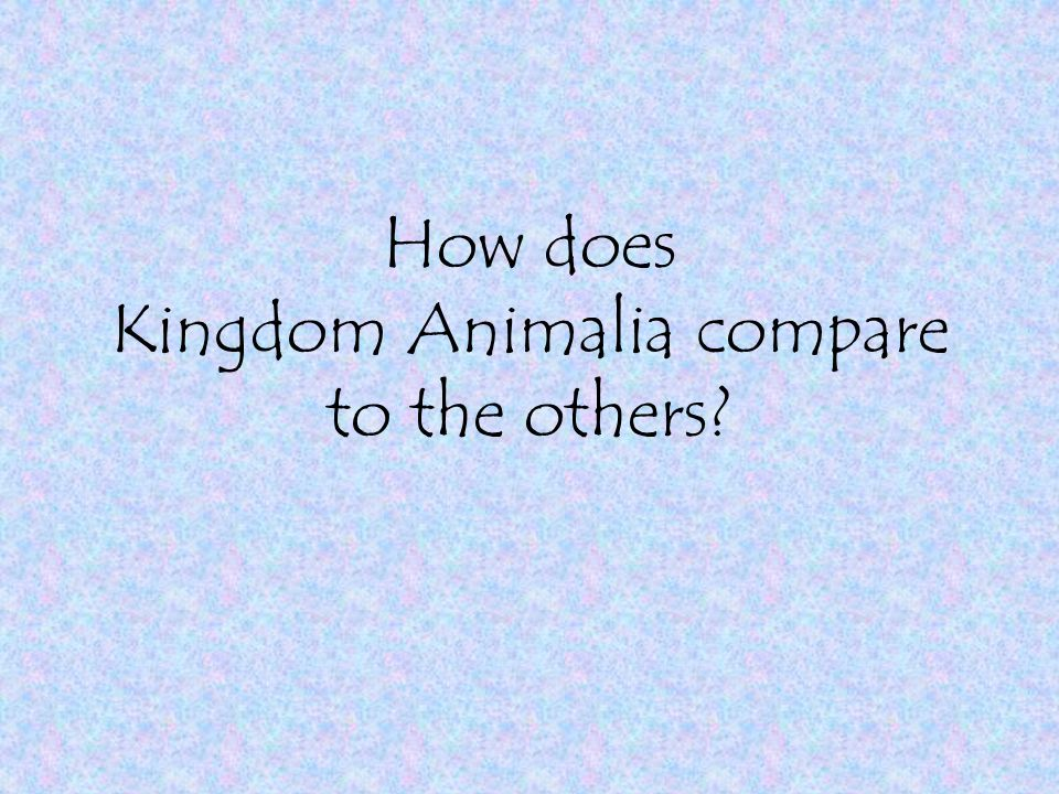 How does Kingdom Animalia compare to the others?