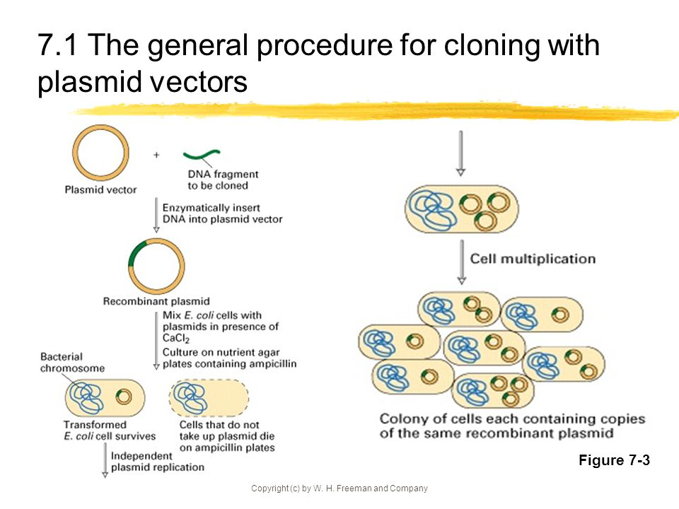 Analysis of genes and gene products