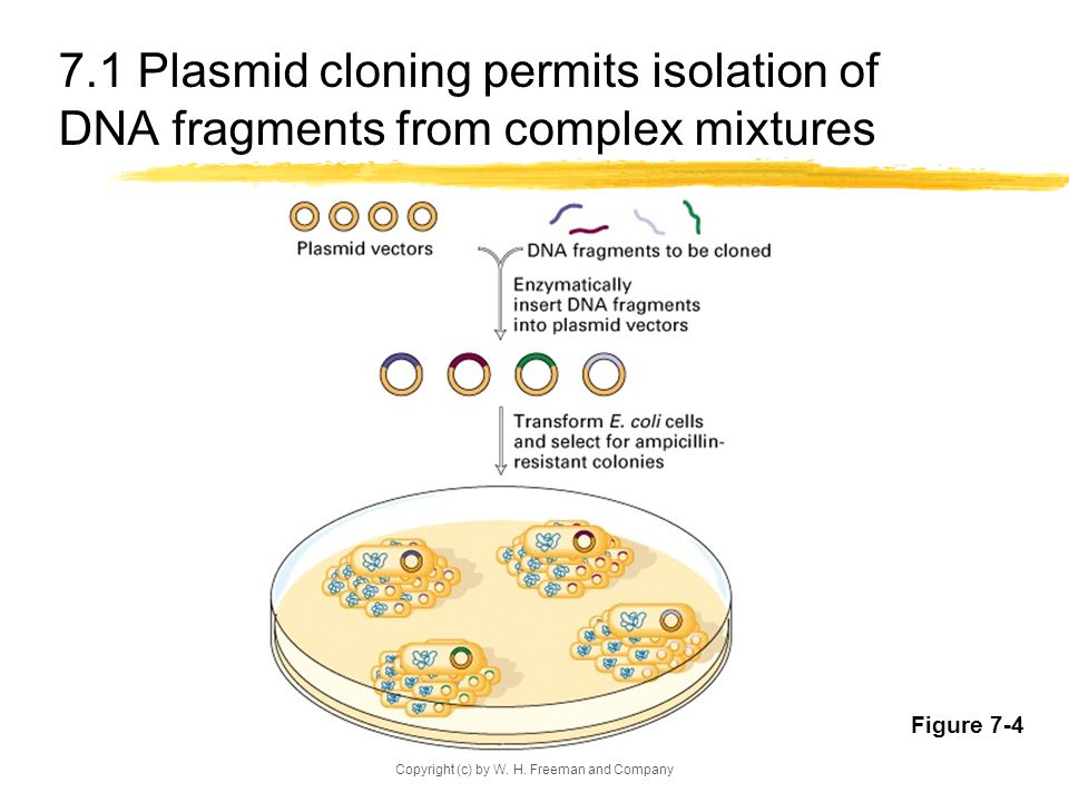 Restriction enzymes and other cloning tools