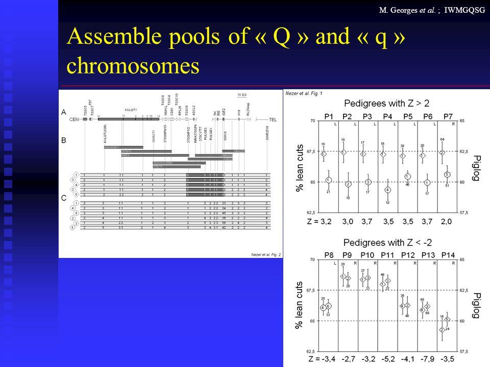 M. Georges et al. ; IWMGQSG Assemble pools of « Q » and « q » chromosomes