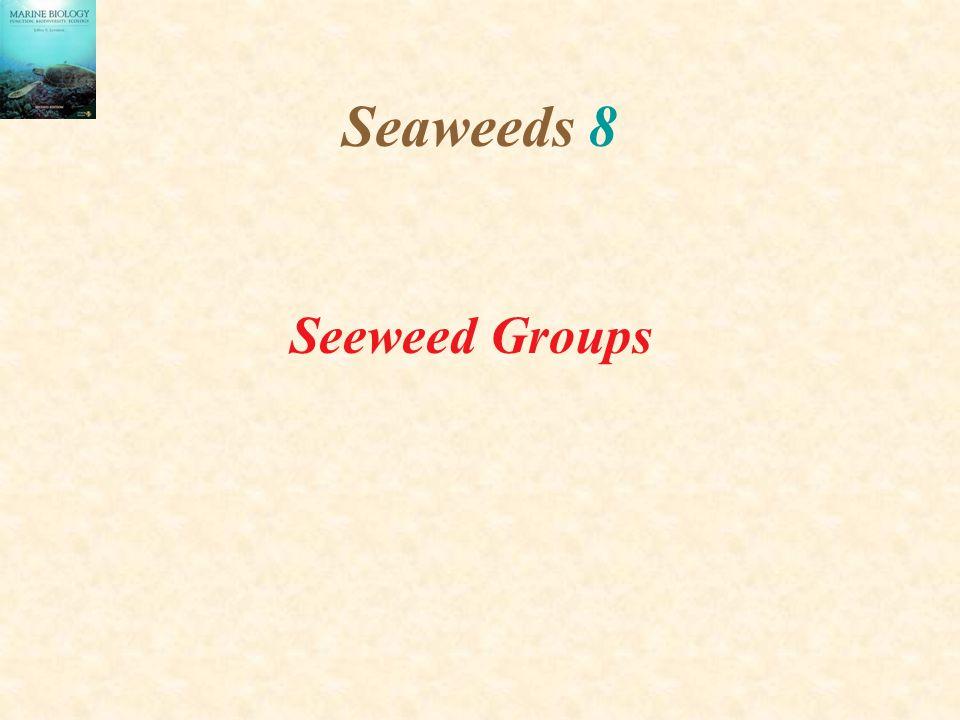 Seaweeds 8 Seeweed Groups