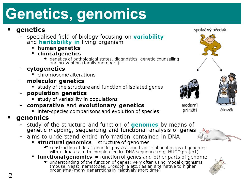 2 Genetics, genomics genetics –specialised field of biology focusing on variability and heritability in living organism human genetics clinical geneti
