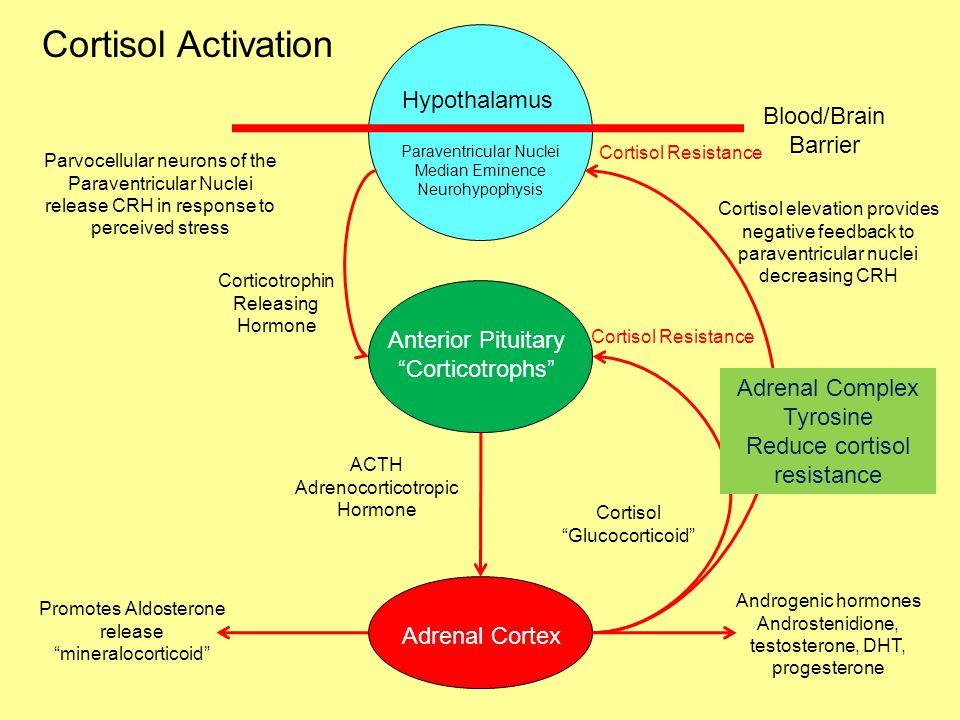 Hypothalamus Blood/Brain Barrier Blood Solutes Nutrients Glucose Amino Acids Fatty Acids Osmotic electrolytes especially sodium Hormones Cortisol Immu
