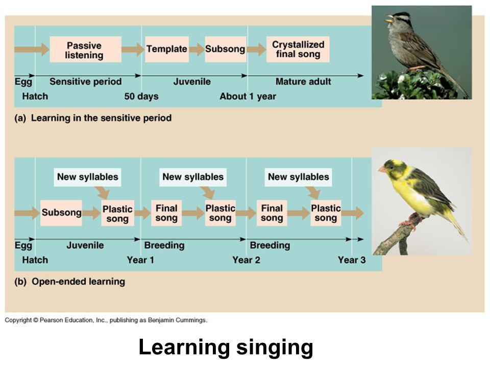 Learning singing