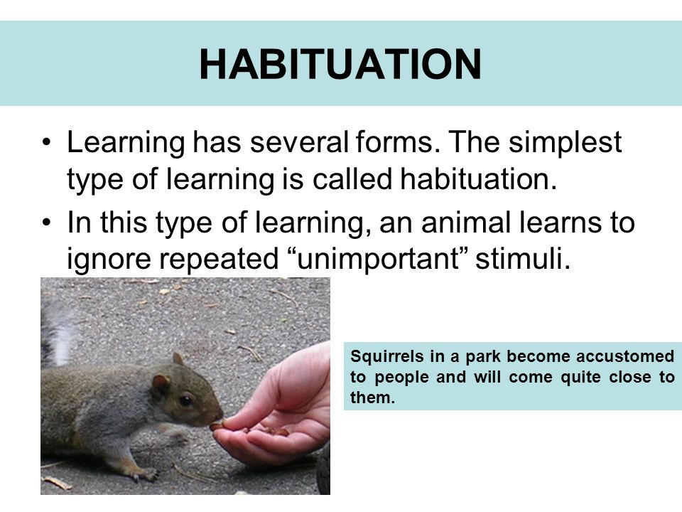 Learning has several forms. The simplest type of learning is called habituation. In this type of learning, an animal learns to ignore repeated unimpor