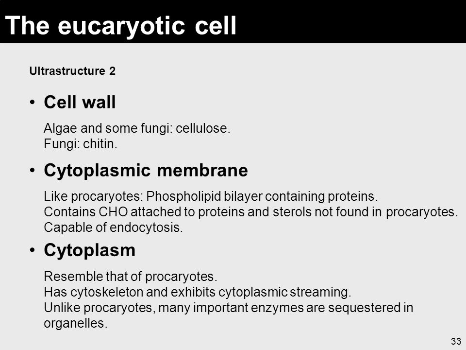 33 The eucaryotic cell Ultrastructure 2 Cell wall Algae and some fungi: cellulose. Fungi: chitin. Cytoplasmic membrane Like procaryotes: Phospholipid
