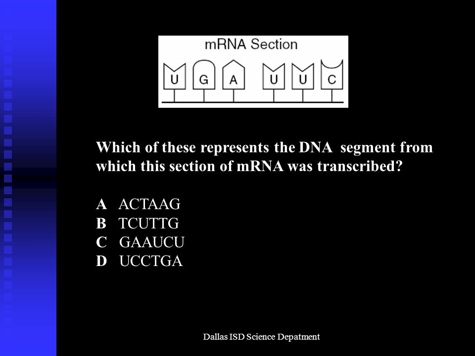 Dallas ISD Science Depatment Which of these represents the DNA segment from which this section of mRNA was transcribed.