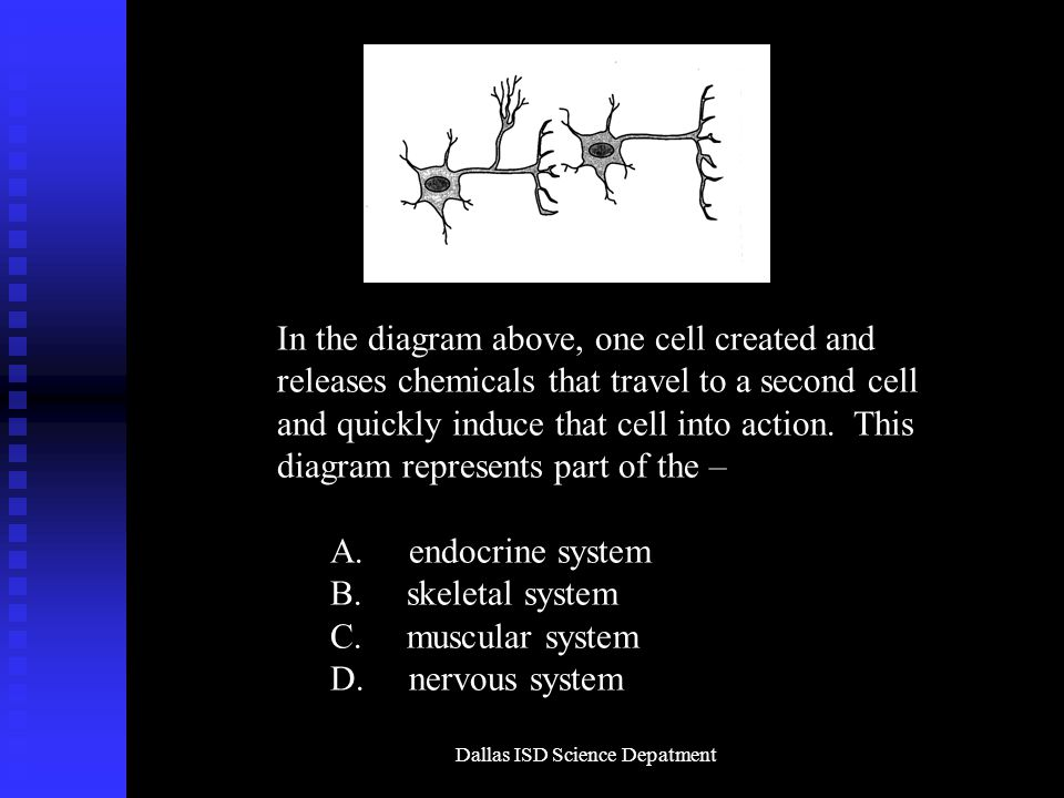 Dallas ISD Science Depatment In the diagram above, one cell created and releases chemicals that travel to a second cell and quickly induce that cell into action.