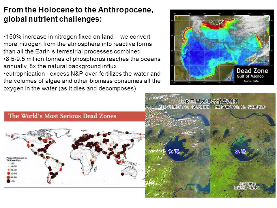 From the Holocene to the Anthropocene, global nutrient challenges: 150% increase in nitrogen fixed on land – we convert more nitrogen from the atmosphere into reactive forms than all the Earth´s terrestrial processes combined 8.5-9.5 million tonnes of phosphorus reaches the oceans annually, 8x the natural background influx eutrophication - excess N&P over-fertilizes the water and the volumes of algae and other biomass consumes all the oxygen in the water (as it dies and decomposes)