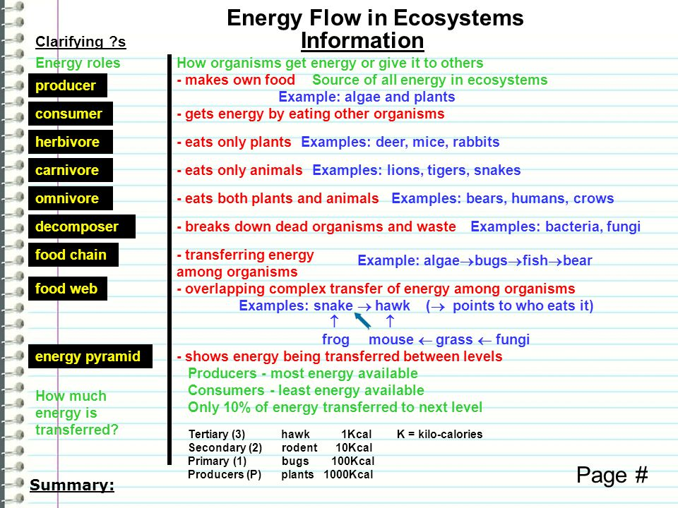 Know What are the sources of energy in an ecosystem.