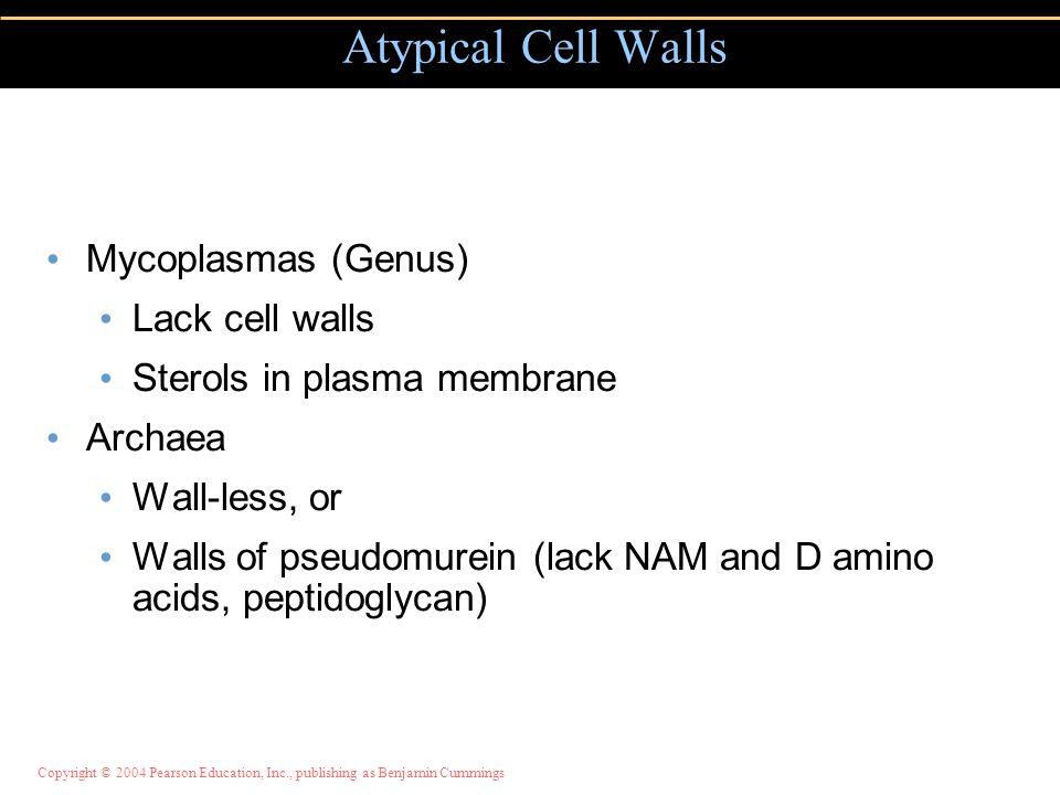 Mycoplasmas (Genus) Lack cell walls Sterols in plasma membrane Archaea Wall-less, or Walls of pseudomurein (lack NAM and D amino acids, peptidoglycan)