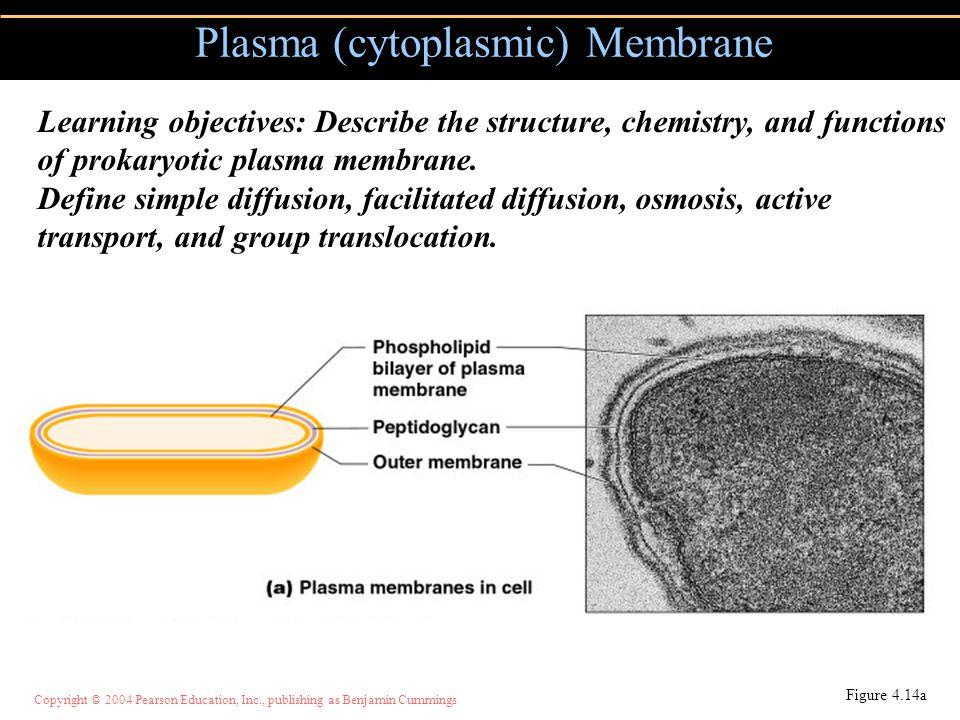 Copyright © 2004 Pearson Education, Inc., publishing as Benjamin Cummings Plasma (cytoplasmic) Membrane Figure 4.14a Learning objectives: Describe the