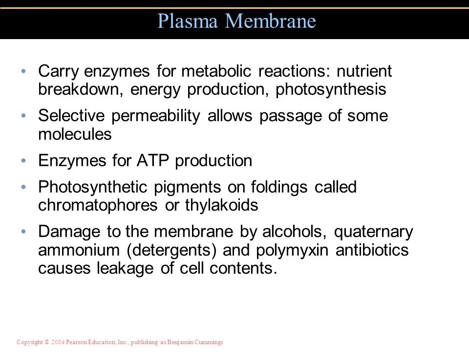 Copyright © 2004 Pearson Education, Inc., publishing as Benjamin Cummings Carry enzymes for metabolic reactions: nutrient breakdown, energy production