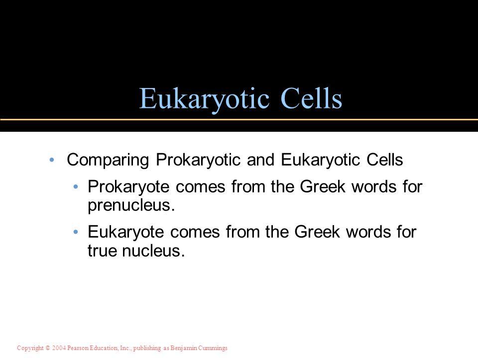 Copyright © 2004 Pearson Education, Inc., publishing as Benjamin Cummings Eukaryotic Cells Comparing Prokaryotic and Eukaryotic Cells Prokaryote comes