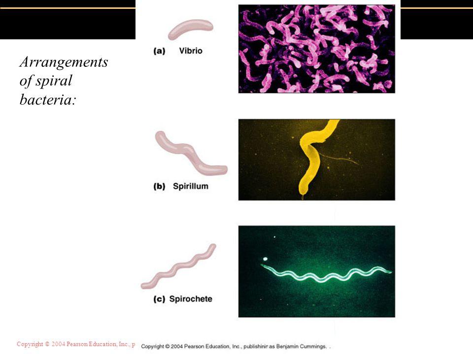 Copyright © 2004 Pearson Education, Inc., publishing as Benjamin Cummings Arrangements of spiral bacteria: