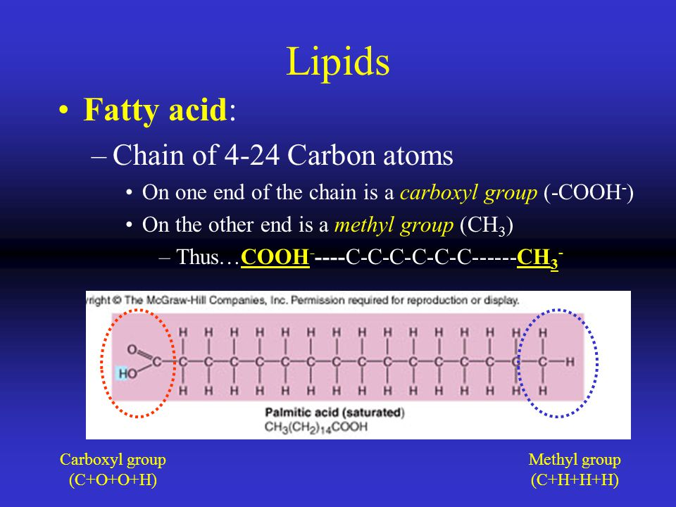 Lipids Fatty acid: –Chain of 4-24 Carbon atoms On one end of the chain is a carboxyl group (-COOH - ) On the other end is a methyl group (CH 3 ) –Thus…COOH - ----C-C-C-C-C-C------CH 3 - Carboxyl group (C+O+O+H) Methyl group (C+H+H+H)