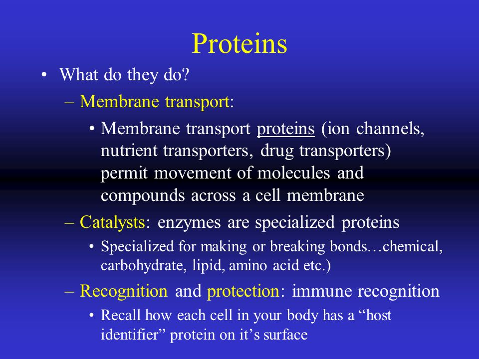 Proteins What do they do.